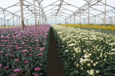 Flower Farm in South America