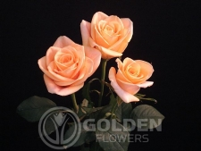 Coloured Rose - Bonanza