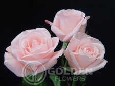 Coloured Rose - Livia