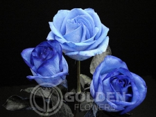 Coloured Rose - Tinted Blue