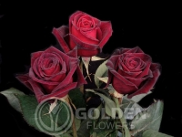 Rose - Black Baccara